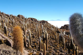 userfiles/image/tours bolivia/The_Uyuni_Salt_Flats_Expedition_Full_Day/