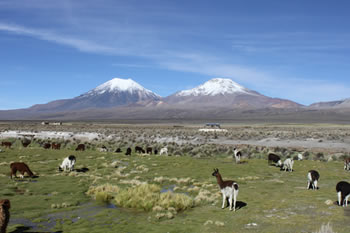userfiles/image/tours bolivia/Tour_to_the_National_Park_of_Sajama_2D_1N/